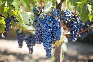 L'Anjou Terre vignobles