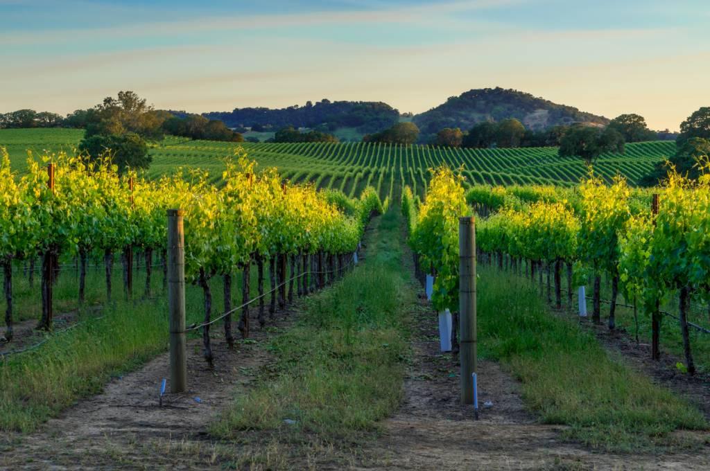 Tourisme vinicole