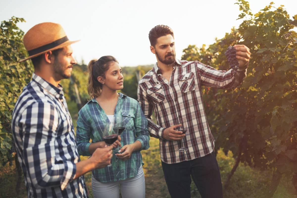 Se détendre avec le tourisme viticole